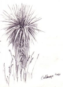 Cabbage Tree by Banx