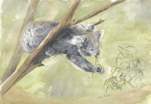 Koala by Banx