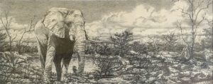 Elephant by Banx